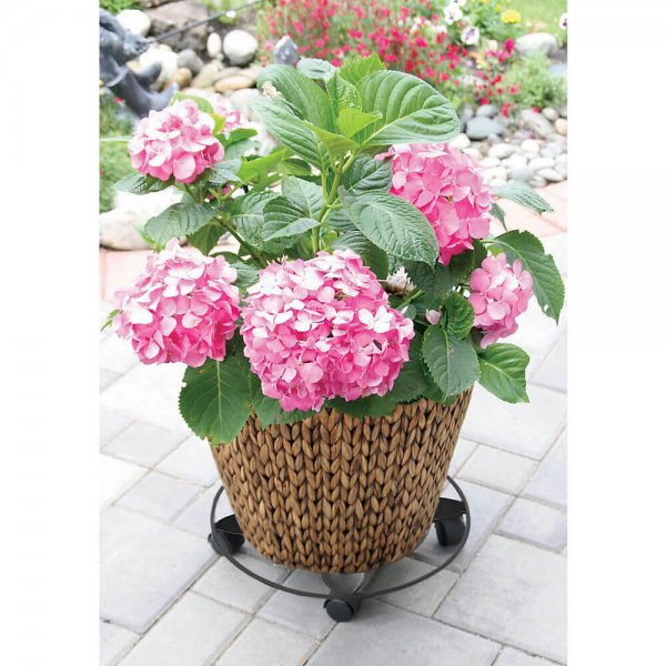 Petal Plant Caddy in Black - Peak Gardenwares